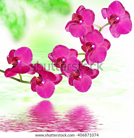 Delicate flower. Closeup of orchid. Bouquet of flowers orchid - stock photo