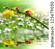 dew drops with ladybugs - stock photo