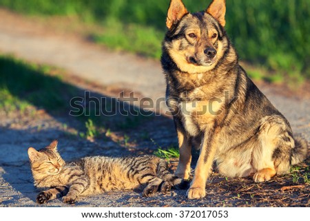 Dog and cat relaxing outdoors in summer