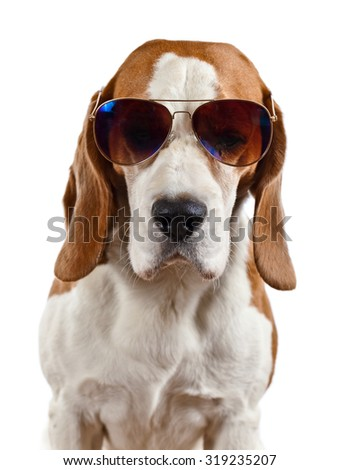 dog in sunglasses, isolated on white background