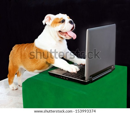 dog play computer. - stock photo