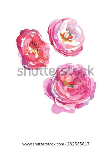 3 dog roses light pink watercolor