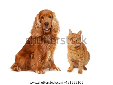Dogs and cat together looking front forward on isolated white background