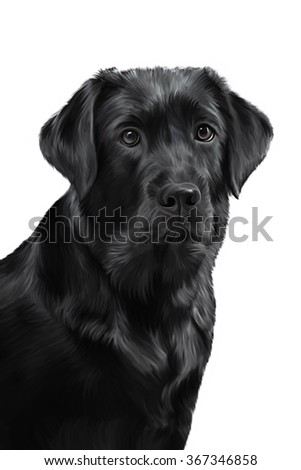 Drawing portrait dog breed black labrador portrait on a white background