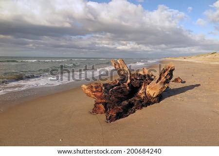 Driftwood on beach, Tauranga, New Zealand                         - stock photo