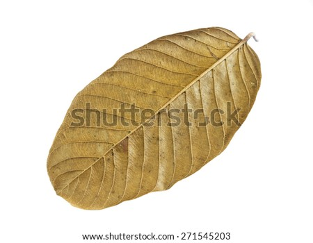 Dry leaves isolated on white background.