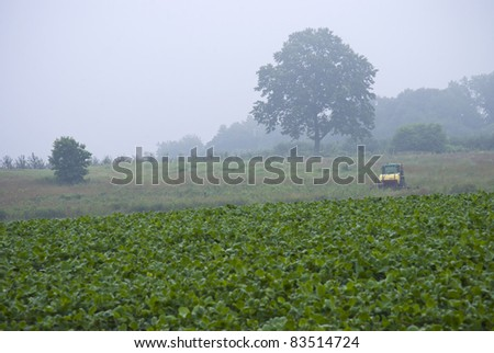 """Early Morning Farm"" A fogy morning view of a farm in Central New Jersey. - stock photo"