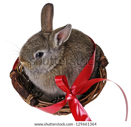 easter rabbit in a basket - stock photo