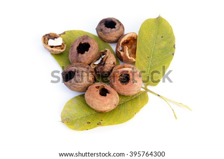 Eaten walnuts lying on walnuts' leaves  - isolated on white                  - stock photo