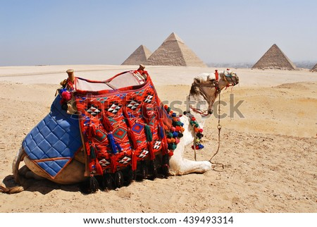 Egypt -Traditionally decorated camel