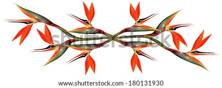 eight bird of paradise flowers joined and mirrored together  - stock photo