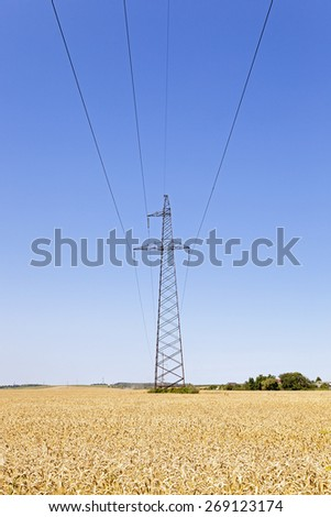 electric line in the agricultural field where the corn is ripe.