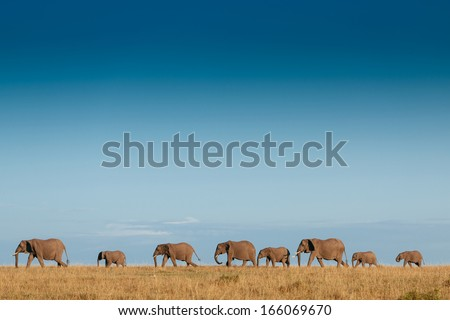 elephant family - stock photo