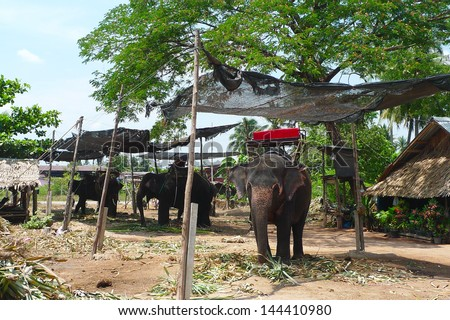 Elephant village near Bangkok, Thailand. The Thai Elephant is the Symbol of Nation. A white elephant is even included in the flag of the Royal Thai navy