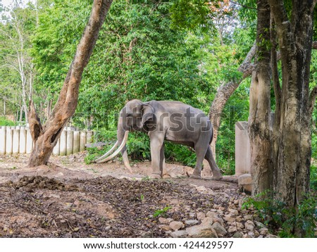 elephant with tree
