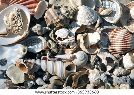 Empty shells on a pile - stock photo