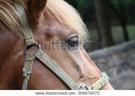 eye, brown horse, Portrait of a sports stallion. Riding on a horse. Thoroughbred horse. Beautiful horse.