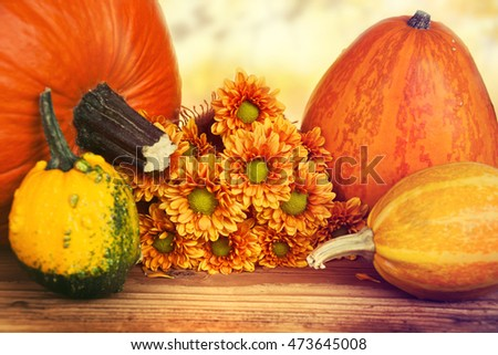 Fall pumpkins and apples on wooden rustic table. Thanksgiving dinner