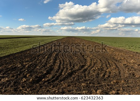 farmland, plowed field, spring, landscape, agricultural, fields of wheat