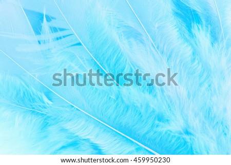 feather macro texture - stock photo
