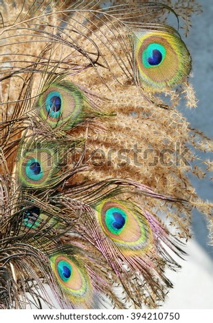 Feather of a peacock in a vase - stock photo