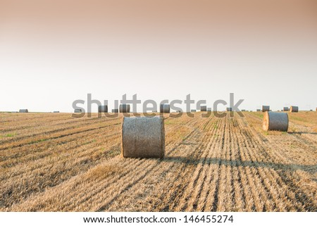 field with straw bales in summer - stock photo
