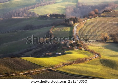 Fields and vineyards        Vineyards near the town of Montalcino - stock photo