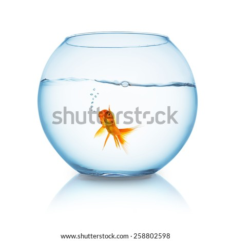 fishbowl with a goldfish that swims and breathing in water  - stock photo