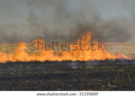 flame on the wheat field