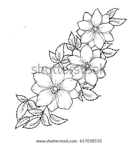 Floral Background With Flowers And Leaves Black White Graphics Hand Drawing Design Element