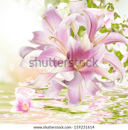 Flower beautiful orchid.Exotic water background 	 - stock photo