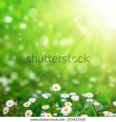 flower field  on the sky. nature abstract