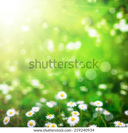 flower field  on the sky. nature abstract - stock photo
