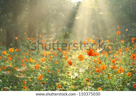 flower field under the morning sunlight - stock photo