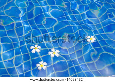 Flower floating in swimming pool water