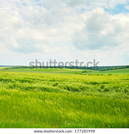 flowering fields and white clouds - stock photo