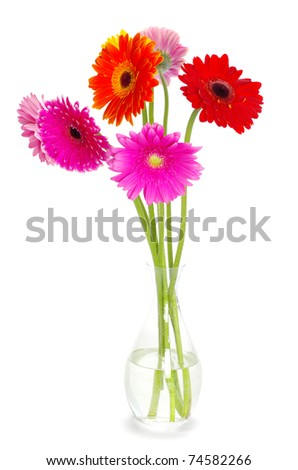 flowers gerberas - stock photo