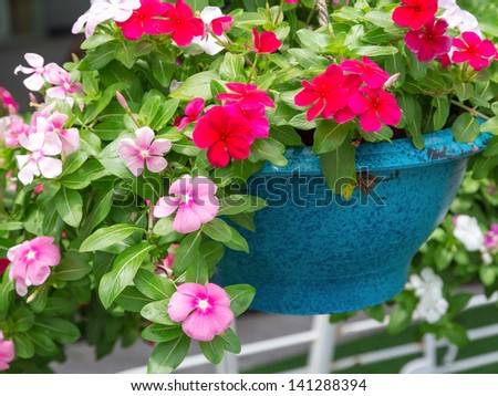 flowers in blue pot - stock photo