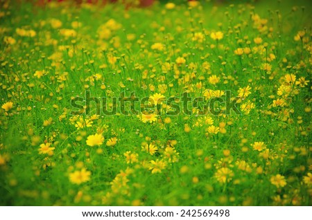 flowers in the field on paper background - stock photo