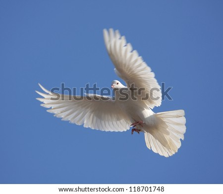 flying white dove - stock photo