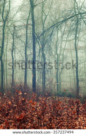 Foggy woodland and warm orange fallen leaves - stock photo
