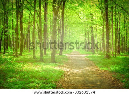 forest path in the morning