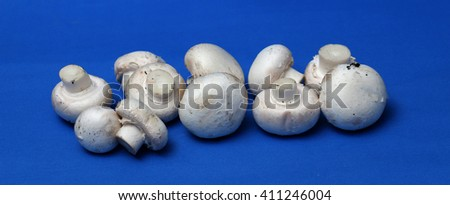 fresh champignon mushrooms on a blue background - stock photo