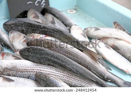 Fresh fish stall Marseille old harbor France - stock photo
