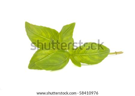 Fresh Green Basil - stock photo