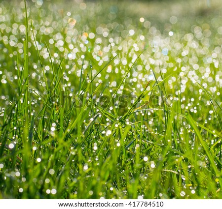 Fresh green grass with water drops on background of sunlight. Soft focus
