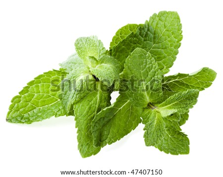 Fresh green mint leaves isolated on white