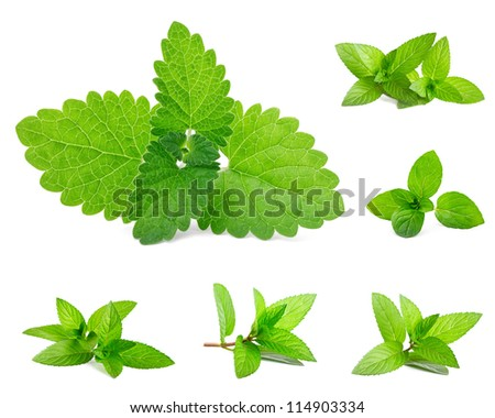 Fresh mint isolated on white. Set - stock photo