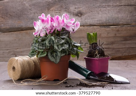 Fresh potted plants and tools for plants Care