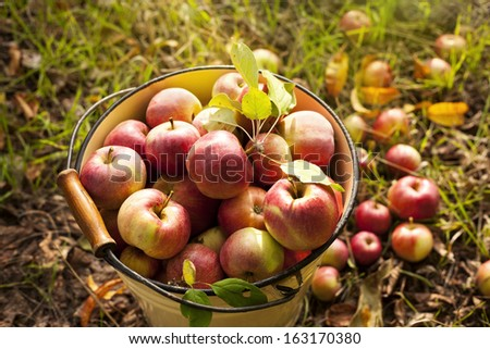 fresh red apple - stock photo